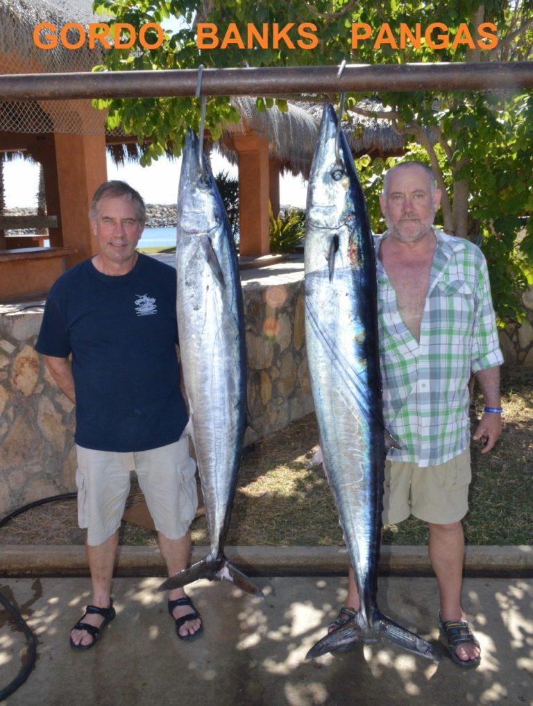 Cabo fishing report gordo banks cabo fishing report 10 dec for San jose del cabo fishing report