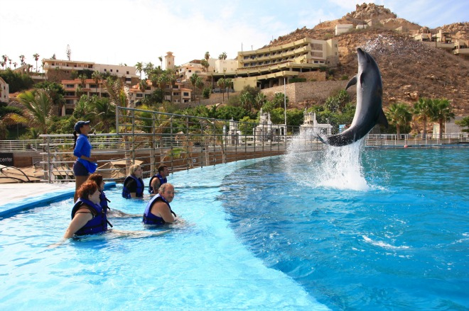 Cabo News   Trouble Ahead For Dolphin Shows